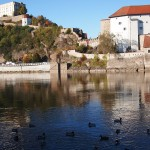 Ducks in Passau